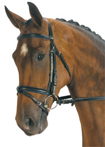 View Topic Aisling Equestrian Centre Irish Horse